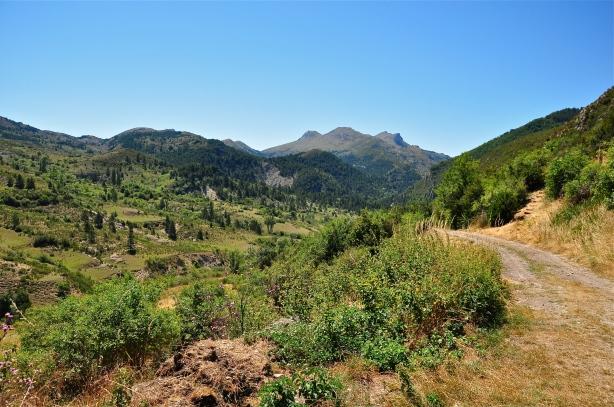 mountain path, Provence, Les Alpes de Haute Provence, France, road, gravel road, mountains, sky, hills, forest, trees, shrubs, blue, green, soil, dirt, rocks, green, brown